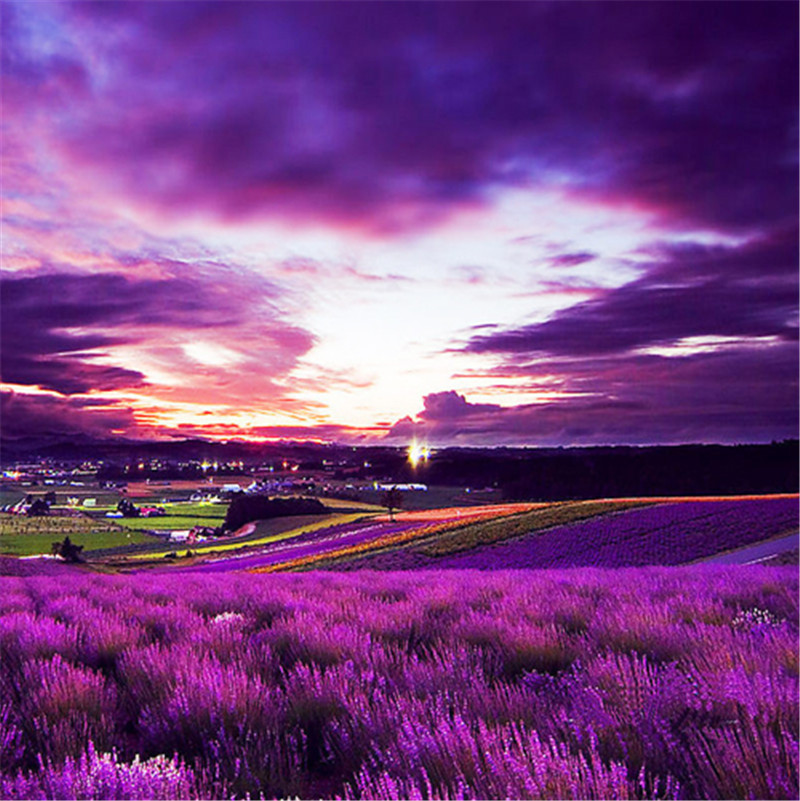 Big Sale! 200pcs Bonsai Provence Lavender Purple Vanilla Flowers Fragrant Lavandula Organic Lavender Plants Flower Plant Home