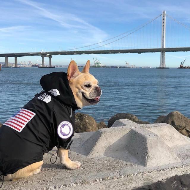 Dog Face Windbreaker Sport 4