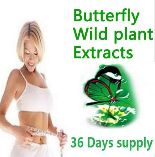 36 days supply diet product butterfly wild plant botanic extracts 100% effective advanced slimming gels fat burner not daidaihua