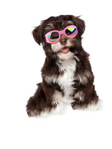 Goggles Sunglasses Cool Pet-Dog Dog-Protective Foldable 6-Colors Pet-Eyewear
