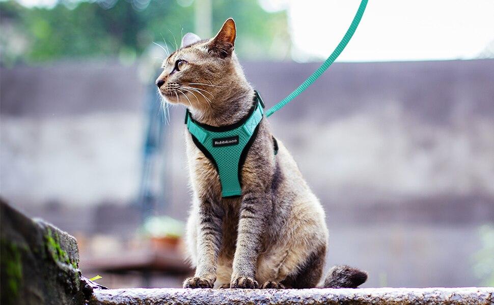 Kedi göğüs tasma