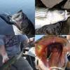 VTAVTA 8 Segment 10/14cm Sinking Wobbler Fishing Lures 5
