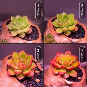 Image 3 - Светодиодная лампа для выращивания растений, фитолампа полного спектра, 50 Вт, SMD5730