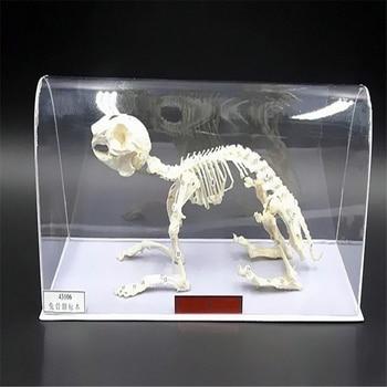 Real Rabbit Bone Specimen Taxidermy Teaching Equipment Biological Specimen Bone Collectibles Study Animal Skulls Home Ornaments