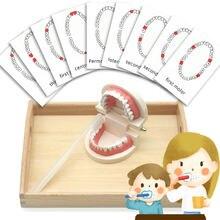 Монтессори игрушки сенсорные для чистки зубов деревянный поднос