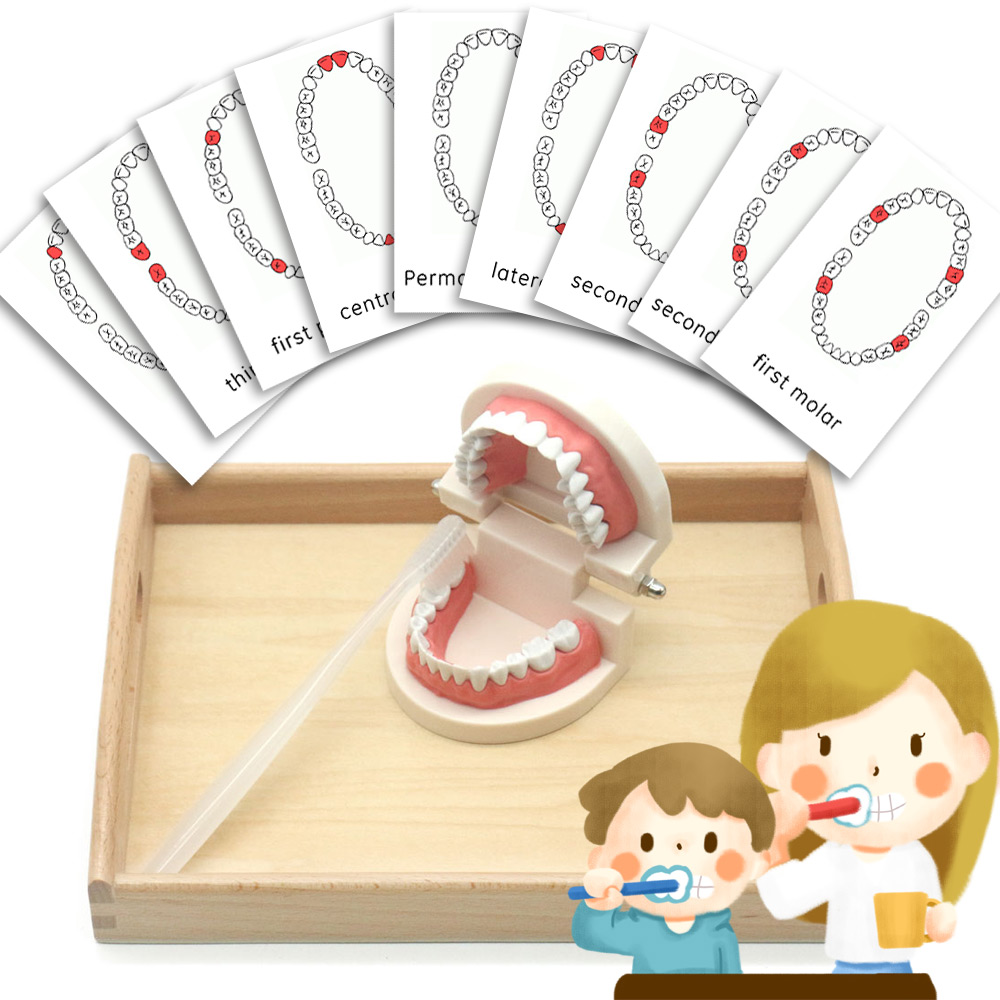 Montessori Sensory Toys Brushing Teeth Exercise Wooden Tray Set Educational Toys Juguetes Montessori Material MC0164H