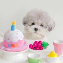 Birthday-Cake-Hat Voice-Toy Korean INS Dog-Pet Trade Explosion-Style Original