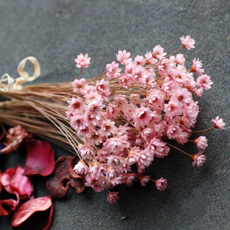 30/за штуку Бесплатная доставка Декоративные засушенные цветы мини Дейзи небольшой букет со звездой с натуральным растительным экстрактом ...