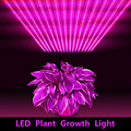 Phyto LED Plant Growth Light LED Strip Dimmable 2835 Full Spectrum Hydroponic for Seeds Plants Growth Greenhouses Photosynthesis