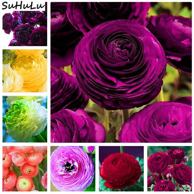 200 Pcs Double Ranunculus Plant Flower Flores Rare Bonsai Perennial Gorgeous Cut Flower DIY For Home Garden Ornaments Purifying