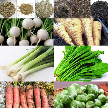 120Pcs сад и огород Vegetable semillase verduras Backyard Balcony Garden Carrot Garlic semilla семена растений