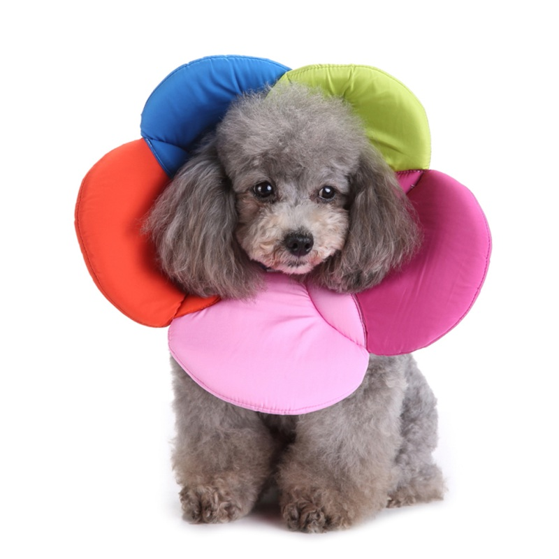 Soft Dog Accessories Recovery font b Pet b font Cone E Collar for Cats Dogs Flower