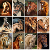AZQSD DIY Painting By Numbers Animals Horse Acrylic Painting Unframe Modern Picture Home Decor For Living Room 40x50cm