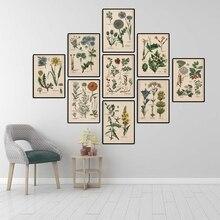 Colección botánica Vintage pósters e impresiones hierbas 1898s ruso cuadros de arte de pared lienzo pintura decoración de la pared del hogar