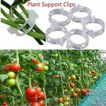 Сад растение опора растение зажим% 2C пластик галстук виноград зажим% 2C домашнее хозяйство садоводство принадлежности% 2C комнатное садоводство и выращивание принадлежности