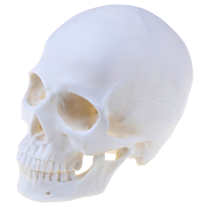 Skull Statue Sculpture Crafts Education Painting Medical Model Resin Skull Halloween Home Decoration Accessories Statues & Sculptures     - title=