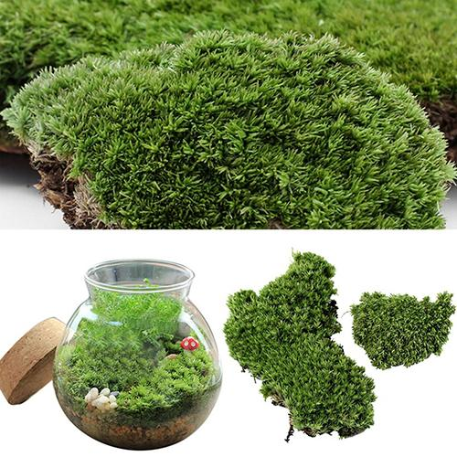New Home Party Decoration Artificial Green Grass Moss Plant Ornament Miniature title=