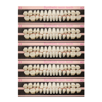 280/56pc Tooth model Plastic Teeth Teaching Model Dedicated Teeth Dental Material Teeth Care Tool A2Type Dentistry Dentist tools 1pcs dental teeth model 6 times caries comparation study denture tooth models dentist studying and researching dentistry product