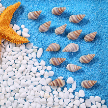 natural conch Marine aquarium decor Family home decoration Fish tank landscape theme Party Decor DIY Crafts 500g