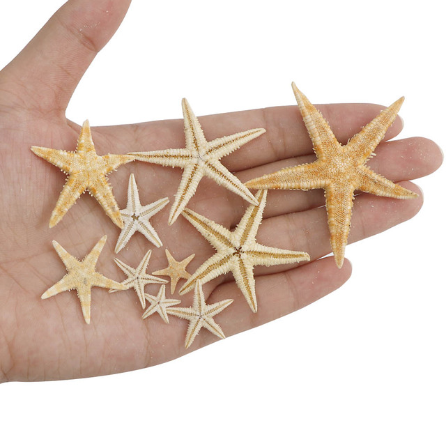 1 Box 1-5cm Natural Starfish Seashell Beach Craft Natural Sea Stars DIY Beach Wedding Decoration Crafts Home Decor Epoxy 6