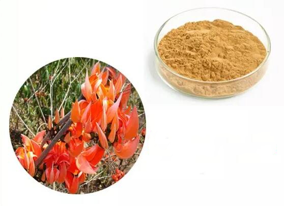 200g/300g/500g 100 % Pure Butea Superba Extract Powder (10:1) High quality And Good Quality|Home Use Beauty Devices| - AliExpress