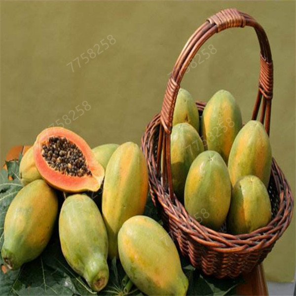 50 Pcs Sweet Big Papaya Penzai Organic Heirloom Vegetable Fruit Plant Penzai Tree Red Heart Papaya Edible Plant For Home Garden
