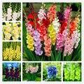 50 шт многолетний семена гладиолуса Сад Природа растения дома ароматный меч цветок лилии эссенция маска для губ LB-87