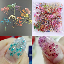10pcs Mixed Dried Flowers Nail Art Decoration DIY 10 Colors Dry Flower Manicure Decoration for UV Gel Acrylic Nail Art Tips 12 colors box 3d real dried dry flower rhinestone storage box nail art decoration uv gel polish stickers manicure tips decals