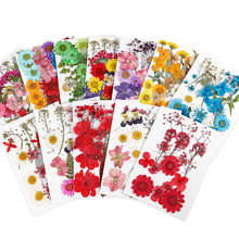 Pressed Real Flowers For Candle Nail Art Decals Small Dried Flowers Scrapbooking Dry Flower Decoration Home Resin Mold Fillings