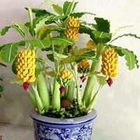 100 pcs Mini Nano Banana Albero Bonsai Mini Banana Seedsplants All'aperto Verdura Frutta di Banana Teste di serie Giardino Pianta Grassa