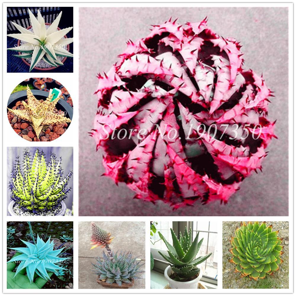 110Pcs Fresh Aloe Bathing Salt For Home Garden Plant Fragrance Bath Salts Dropship ZZ-02