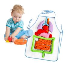Simulation Human Body Apron Teaching Utensils Children Puzzle Enlightenment Apron Early Education Teaching Aids flyingtown montessori teaching aids balance scale baby balance game early education wooden puzzle children toys