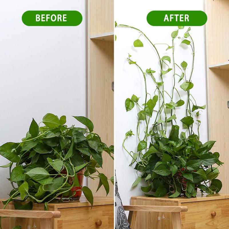 Invisible Wall Rattan Clamp Clip Wall Vine Climbing Sticky Hook Fixed  Bracket Plant Stent Support Agriculture Gardening Tool|Plant Cages &  Supports| - AliExpress