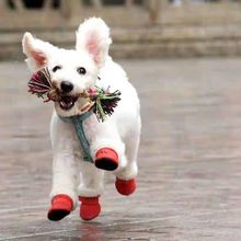cute pet dog shoes winter warm puppy snow walking boots boots cotton blend red shoes for small pet product