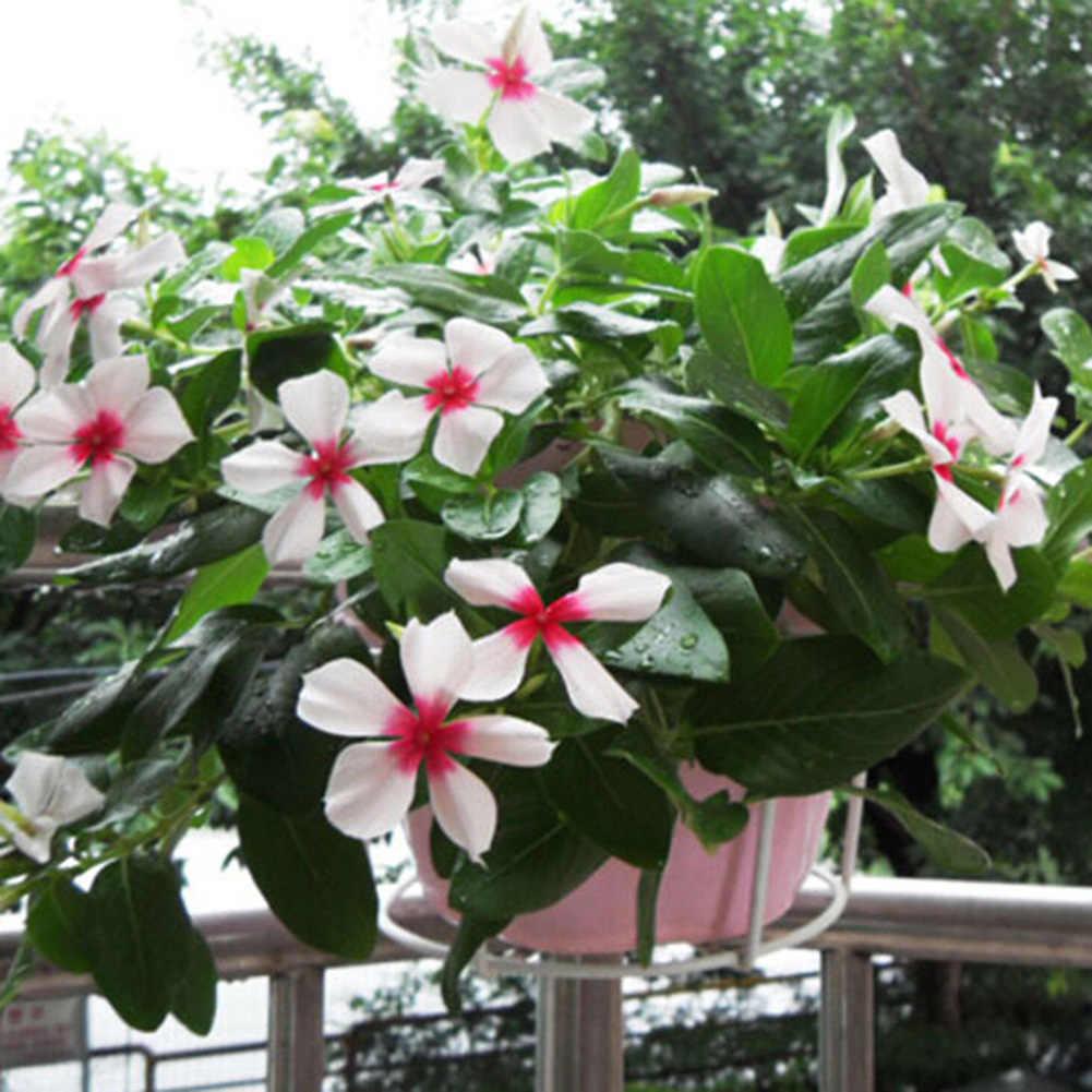 Fiore di ferro Basamento Piatto Vaso di Fiori Cesto di Supporto FAI DA TE Craft Giardino Balcone di Fiori Vaso di Fiori Pianta Planter Supporto Complementi Arredo Casa