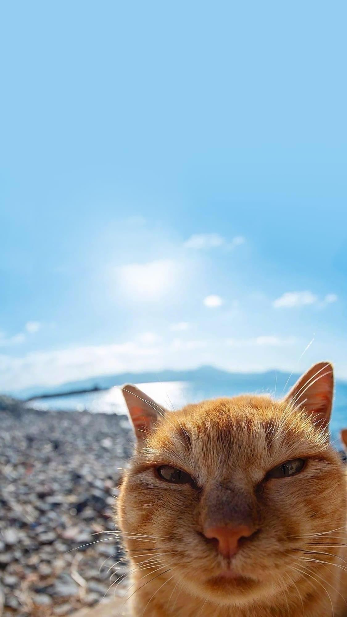 萌猫猫片,霸气喵星人:谁敢挡道?插图11