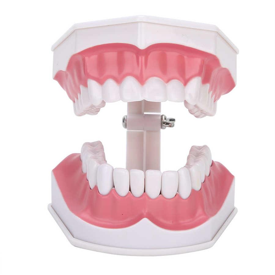 dente vem com uma escova de dentes para o ensino