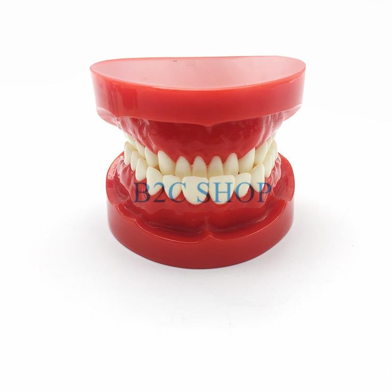Dental Prosthesis Teeth Model Jaw Standard Typodont Demonstration Denture Teaching Model Dental Simulator Technician Tools