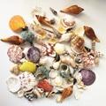120 шт., вечерние свадебные украшения из ракушек, морских раковин, морской тематики, для украшения дома, аквариума, свечей