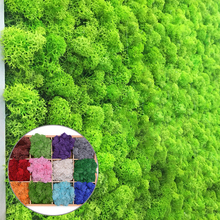 Landscape-Accessories Flower-Material Artificial-Plant-Eternal Garden Home-Decoration