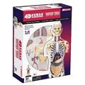 1:6 прозрачное туловище анатомическая модель человеческого тела анатомическая научная медицинская Студенческая медицинская учебная техни...