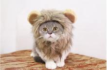 Лев превращается в Хэллоуин День Святого Валентина животное