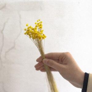 Image 4 - 90 יח\חבילה טבעי ברזילאי מיני דייזי יבש אגרטל זכוכית בקבוק דקורטיבי מילוי חומר בית חתונת קישוט אבזרים