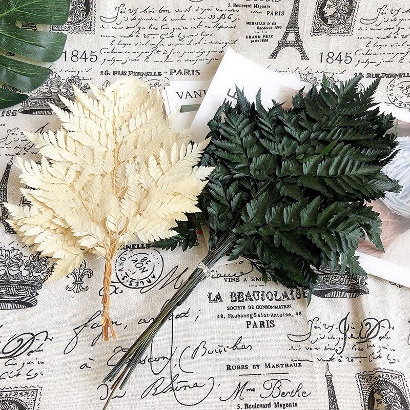 10 шт./лот натуральный сушеный папоротник, лист Alpinia Serrulata, материал «сделай сам»