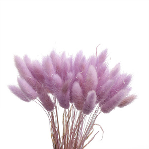 Лидер продаж, сушеные цветы в пасторальном стиле, букет из натурального материала с кроличьим хвостом, товары для домашнего декора, 50 шт.|Искусственные и сухие цветы|   | АлиЭкспресс