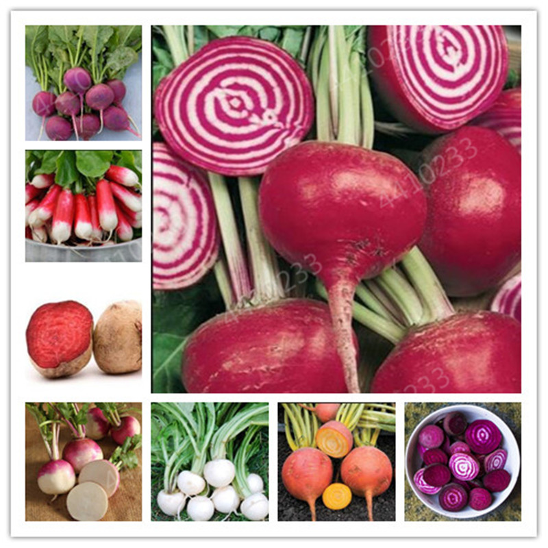 200 Pcs Juicy Beets Outdoor Garden Bonsai Planta Boltardy Beetroot Organic Vegetable Potted Fruit Plant For Flower Pot Planters