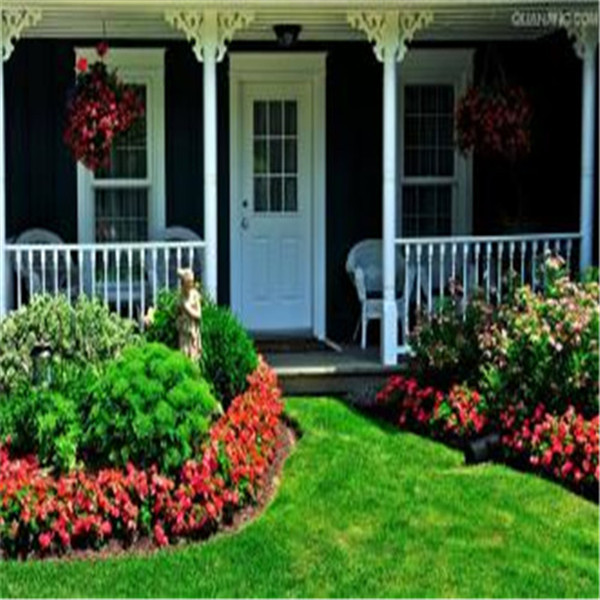 300-Pcs-Japanese-Forest-Grass-lawn-Perennial-Evergreen-Lawn-bonsai-plant-Beautiful-Garden-Ornamental-Plant-Easy (5)