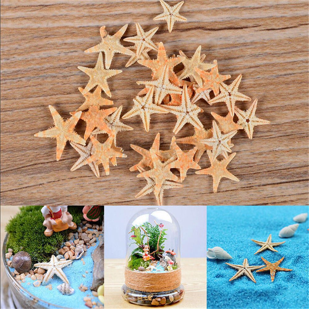 20pcs Starfish Seashell Beach Craft Natural Sea Stars DIY Beach Wedding Decoration Crafts Home Decor Cute Small Mini