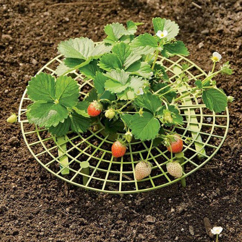 5 Pcs Strawberry Plant Support Cradle Rack Strawberry Plastic Rack For Strawberry Gardening Supplies  !