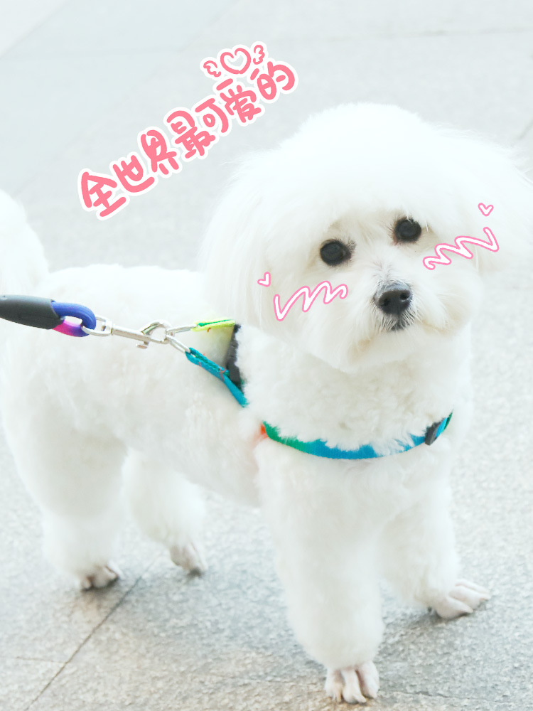 Dog Teddy Lanyard Dog Small Traction Chain Dogs Puppies Back Type Dog Neck Ring Chest And Back Chinlon Universal